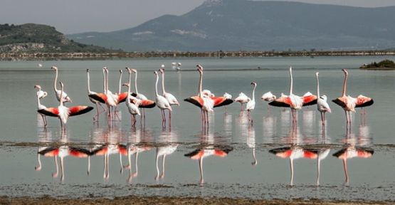Körfez Geçiş Projesi'ne Kuş Cenneti Uyarısı