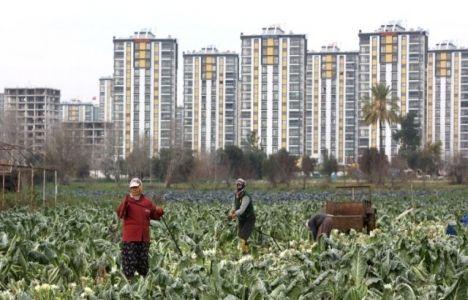 Adana'da Tarım Alanları Kentleşiyor!