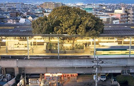 Japonya'da 1 ağaç İçin Plan Değiştirildi!