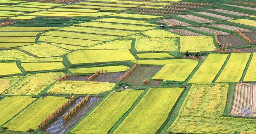 Hangi Tarım Arazileri Prim Yapacak?