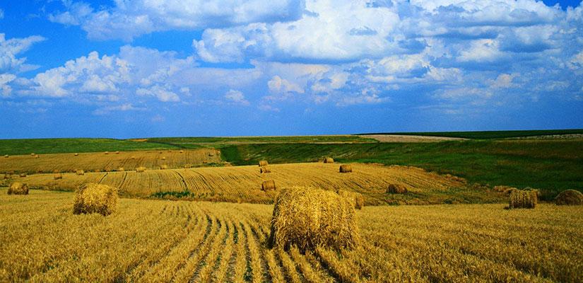 Tarım Arazilerini Devlet Kiralayıp Ekecek